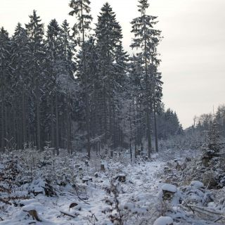 winterwald-in-braunshorn846812073